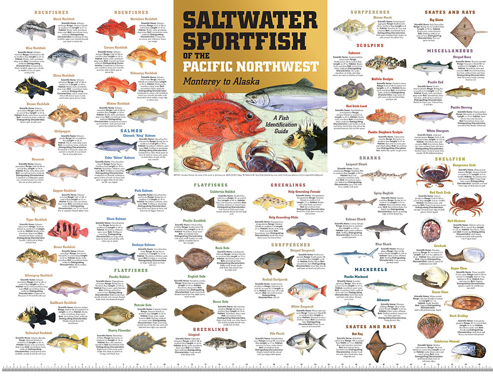 Pacific Northwest Alaska Saltwater Sport Fish Of The Pacific Nw Monterey To Alaska Poster 36 X 27 Paracay Com Wholesale Books,Stargazing Lily Flowers