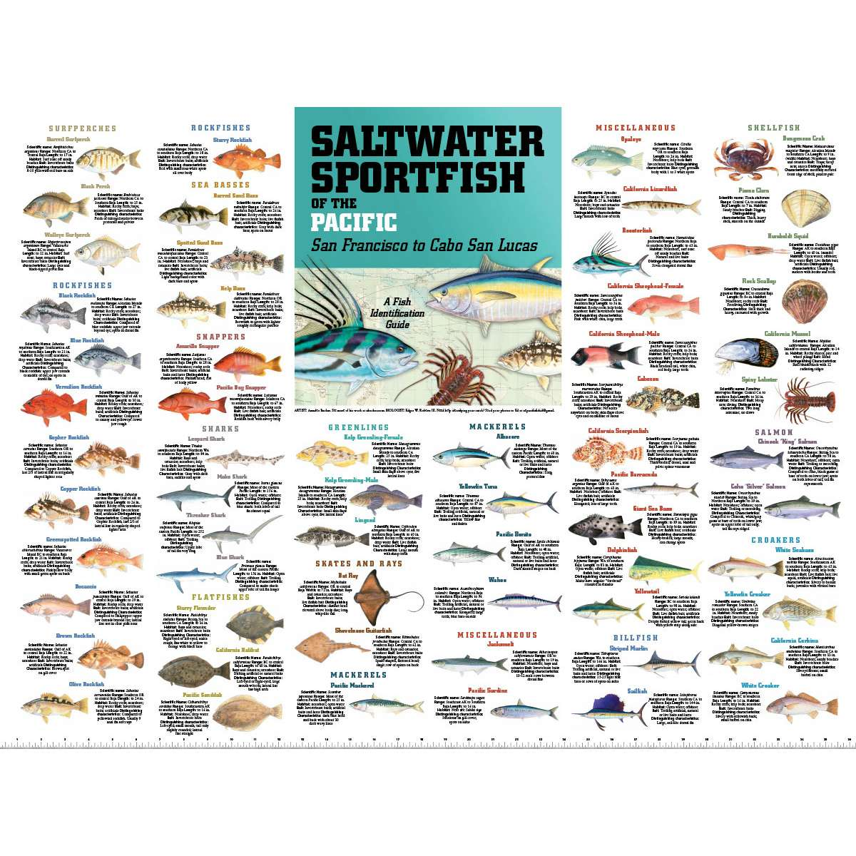 Gift Shop Books Posters Saltwater Sport Fish Of The Pacific San Francisco To Cabo San Lucas Poster Paracay Com Wholesale Books,Stargazing Lily Flowers