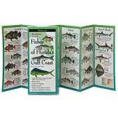 Books for Aquarium Gift Shops :Fishes of Florida's Gulf Coast (Folding Guides)