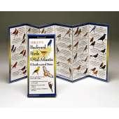 Birding :Sibley's Backyard Birds of Mid Atlantic & South-Central States (Folding Guides)