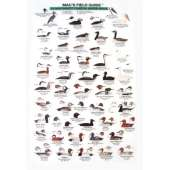 Birding :Northwest Coastal Water Birds  (Laminated 2-Sided Card)