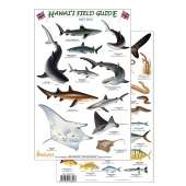 Books for Aquarium Gift Shops :Hawaii Reef Fish Field Guide #2 (Laminated 2-Sided Card)