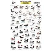 Birding :California Coastal Birds  (Laminated 2-Sided Card)