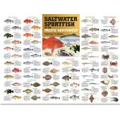 "Alaska :Saltwater Sport Fish of the Pacific NW: Monterey to Alaska POSTER (36"" x 27"")"