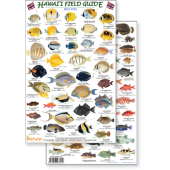 Fish & Sealife Identification Guides :Hawaii Reef Fish #2 (Laminated 2-Sided Card)
