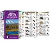Denali Wildlife
