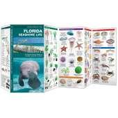 Florida Seashore Life
