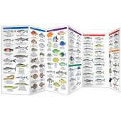 Saltwater Fishes (Folding Pocket Guide)