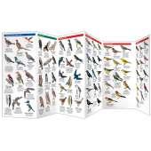 Vancouver Birds (Folding Pocket Guide)