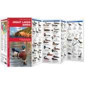 Great Lakes Birds (Folding Pocket Guide)