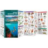 Hawaii Seashore Life (Folding Pocket Guide)
