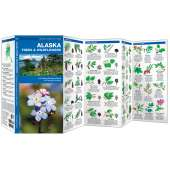 Alaska Trees & Wildflowers