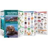 California Seashore Life