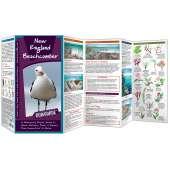 New England Beachcomber