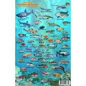 Pacific Northwest Coast Sea Creatures
