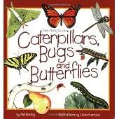 Children's Outdoors :Take-Along Guides: Caterpillars, Bugs and Butterflies