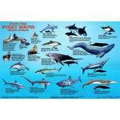 Fish & Sealife Identification Guides :Puget Sound Marine Mammals
