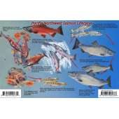 Fish & Sealife Identification Guides :Pacific Northwest Salmon Lifecycle & Identification LAMINATED CARD