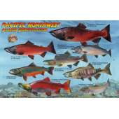 Pacific Northwest Salmon Lifecycle & Identification LAMINATED CARD