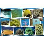 Caribbean Coral Identification Guide LAMINATED CARD