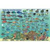 Turks & Caicos Dive Map & Reef Creatures Guide LAMINATED CARD
