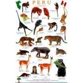Reptile & Mammal Identification Guides :Peru Mammals Guide