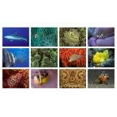 Postcards & Stationary :Sea and Aquarium Life Notecard Set B (12 pack)