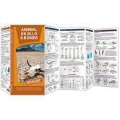 Reptile & Mammal Identification Guides :Animal Skulls & Bones LAMINATED DURAGUIDE