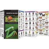 Insect Identification Guides :Bugs & Slugs: A Folding Pocket Guide to Familiar North American Invertebrates