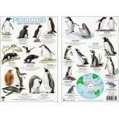 Books for Aquarium Gift Shops :Penguins from Around the World Field Guide (Laminated 2-Sided Card)