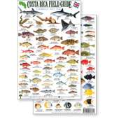 Fish & Sealife Identification Guides :Costa Rica Caribbean Reef Fish, Field Guide (Laminated 2-Sided Card)