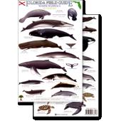 Books for Aquarium Gift Shops :Florida Marine Mammals & Sea Turtles (Laminated 2-Sided Card)