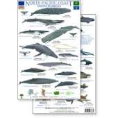Pacific Northwest Field Guides :North Pacific Marine Mammals Guide (Laminated 2-Sided Card)