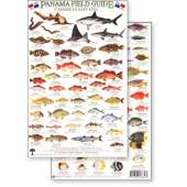 Fish & Sealife Identification Guides :Panama Field Guide, Caribbean Reef Fish (Laminated 2-Sided Card)