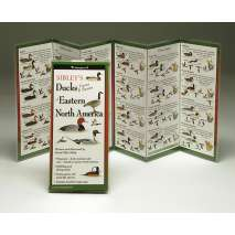 Bird Identification Guides :Sibley's Ducks, Geese & Swans of Eastern North America (Folding Guides)