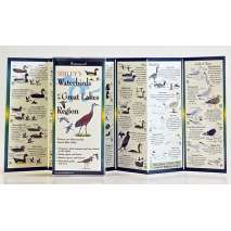 Birding :Sibley's Waterbirds of the Great Lakes (Folding Guides)