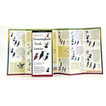 Bird Identification Guides :Sibley's Hummingbirds of North America (Folding Guides)