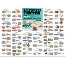 Fish & Sealife Identification Guides, Saltwater Sport Fish of the Pacific: San Francisco to Cabo San Lucas POSTER