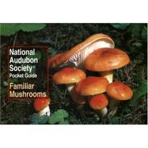 Mushroom Identification Guides, National Audubon Society Pocket Guide to Familiar Mushrooms