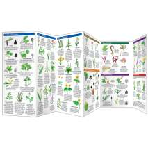 Tree, Plant & Flower Identification Guides :Edible Wild Plants