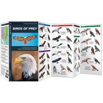 Bird Identification Guides :Birds of Prey