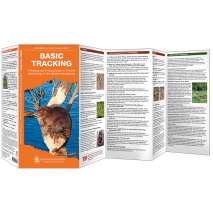 Hunting & Tracking :Basic Tracking
