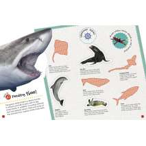 Ultimate Sticker Book: Sharks