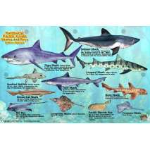 Pacific Northwest Field Guides, Northwest Pacific Coast Sharks & Rays
