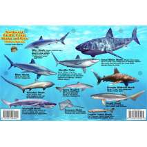 Pacific Northwest Field Guides :Northwest Pacific Coast Sharks & Rays