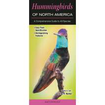 Bird Identification Guides, Hummingbirds of North America