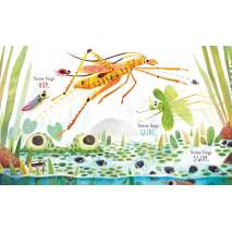 Board Books :Some Bugs
