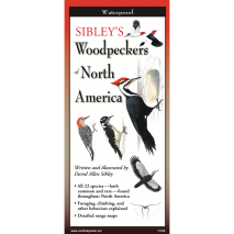 Bird Identification Guides, Sibley's Woodpeckers of North America