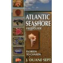 Beachcombing & Seashore Field Guides, Atlantic Seashore Field Guide: Florida to Canada