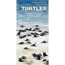 Fish & Sealife Identification Guides, Turtles: A Folding Pocket Guide to the Status of Familiar Species